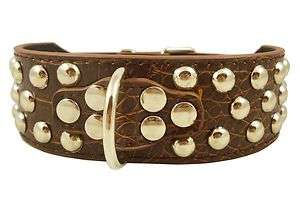 Studs 2 Brown Croc Leather Dog Collar 17 20 Pitt Bull Boxer